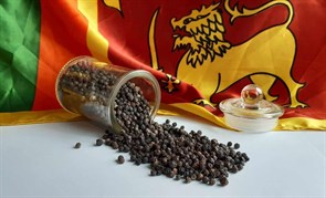Ceylon black pepper photo
